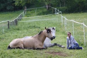 Pferde liegend